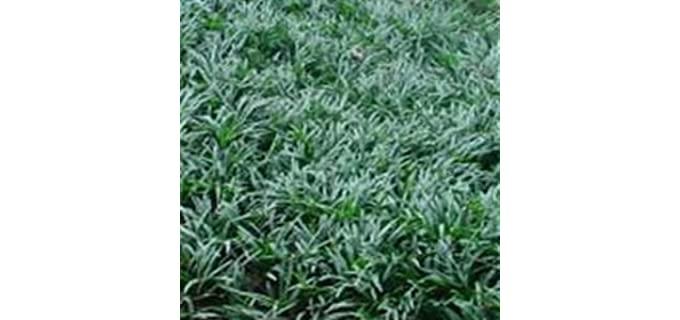 grass in shade