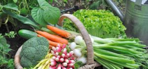 Fertilizer for Vegetables