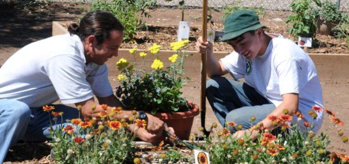 Gardening Pants