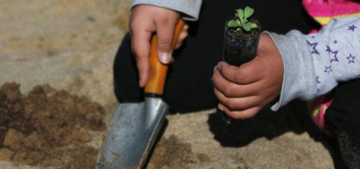 Gardening Hand Trowel